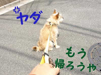 20100613_5.jpg